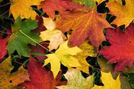 Infantil: El mago del otoño